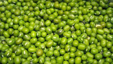 Photo of Đậu xanh có tác dụng gì? Ăn đậu xanh mỗi ngày có tốt không?